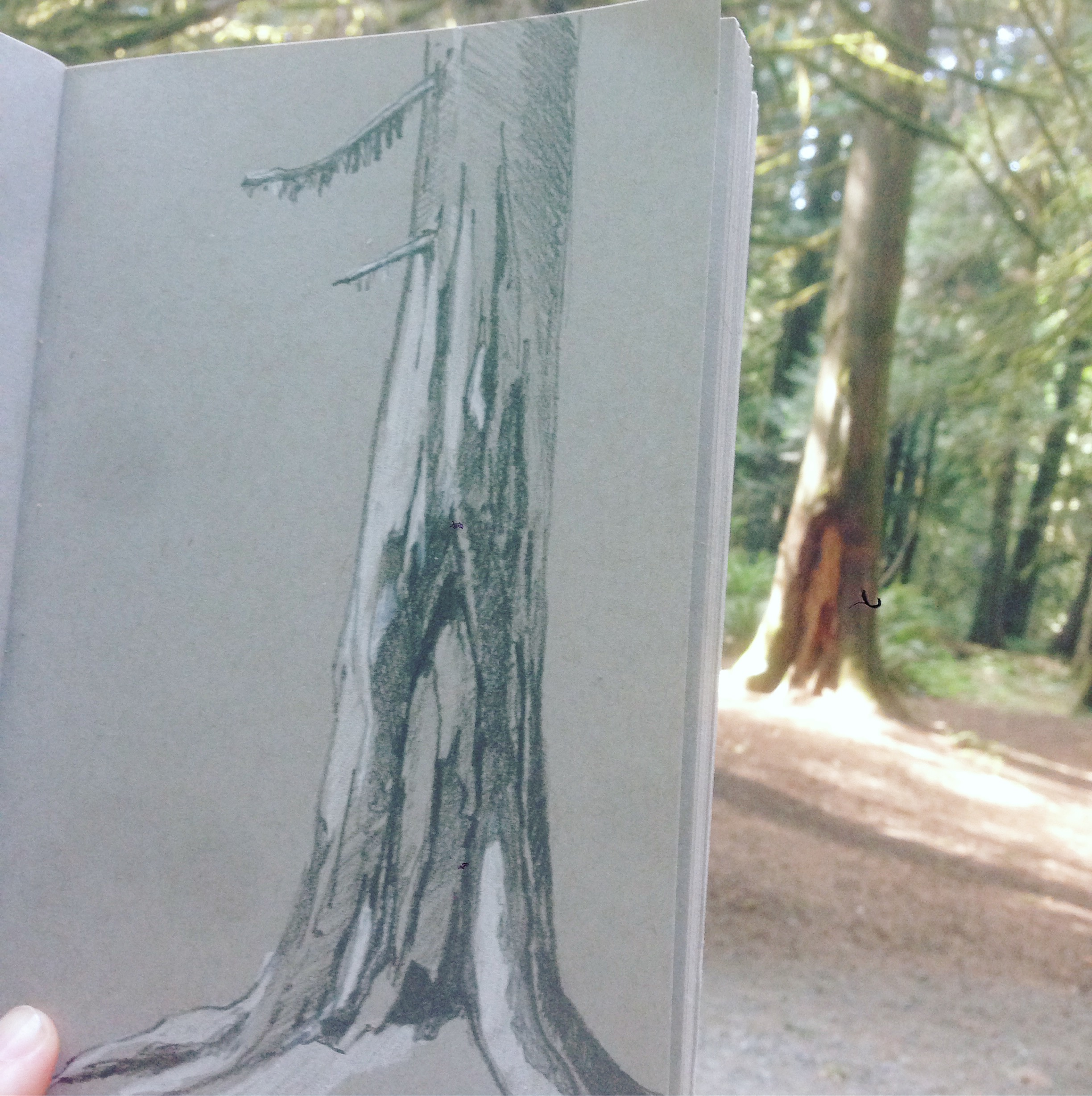 Sketching trees while camping.