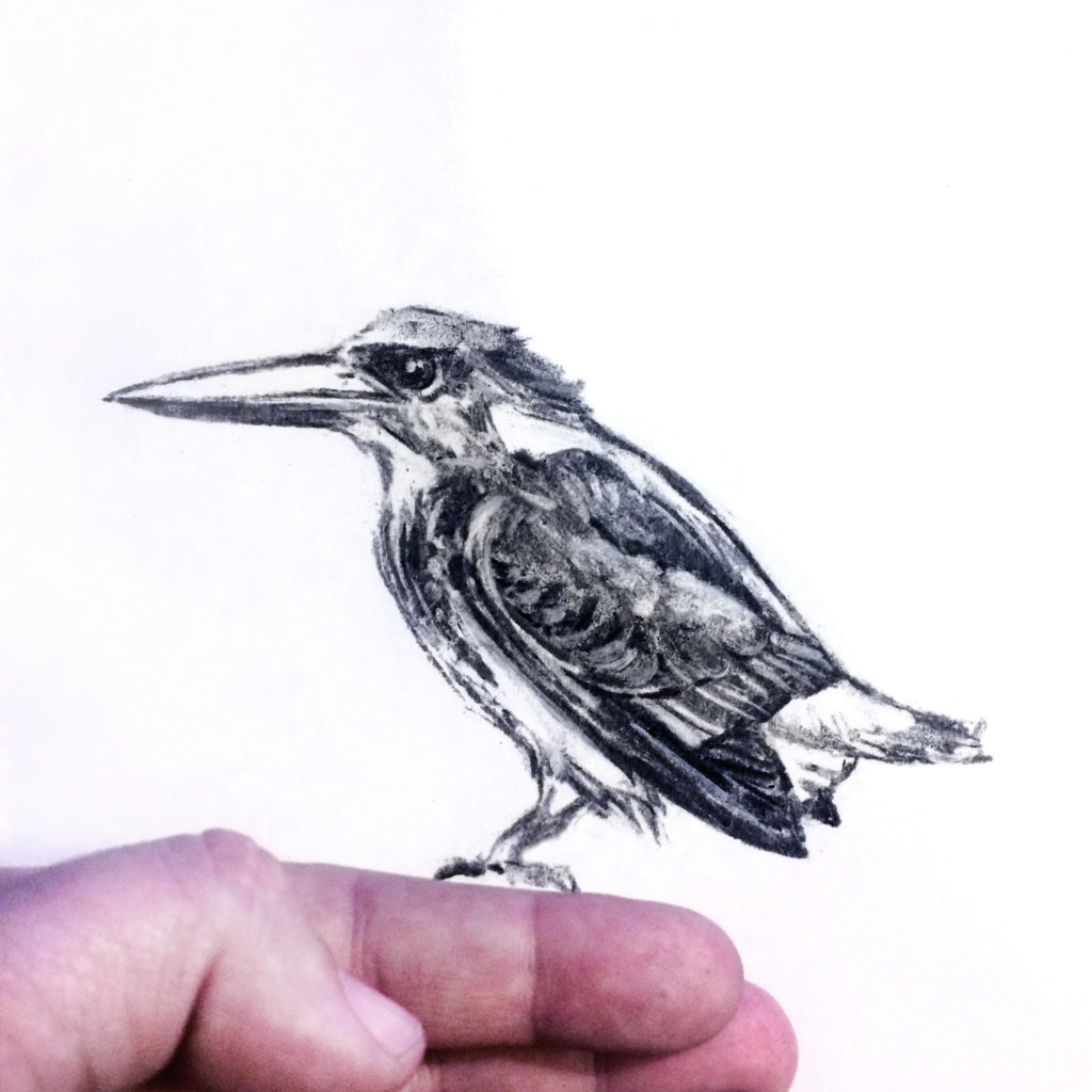 Javan Blue Banded Kingfisher sketch by Crystal Smith