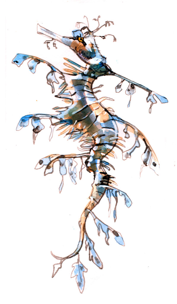 Seadragon drawing and painting by Crystal Smith at New England Aquarium in Boston